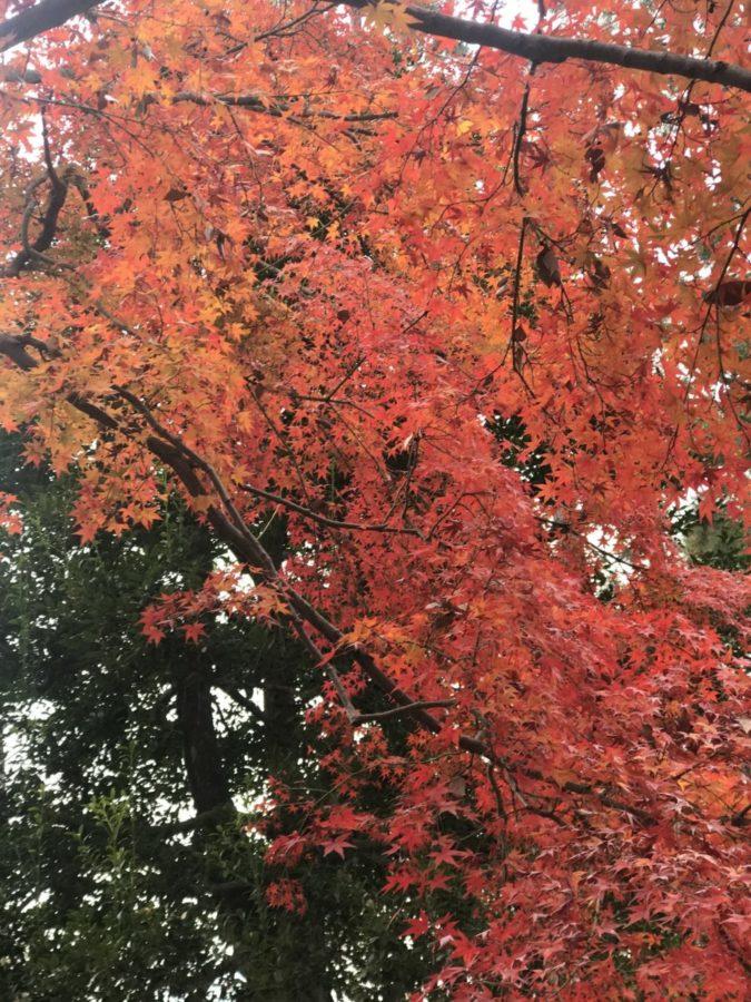 京都 幾松 木屋町